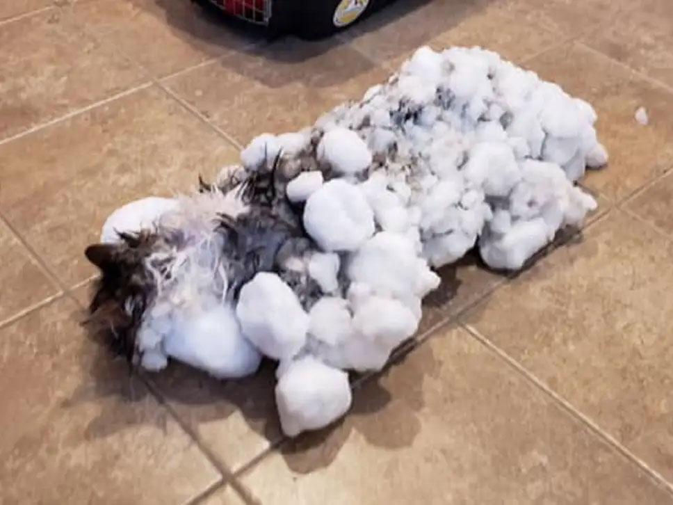 雪に埋もれ凍った猫