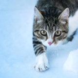 雪に埋もれ凍った猫が「生き返っちゃった」