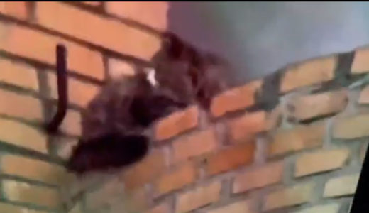 火事の中に残された猫!逃げ場のないこの子の運命は?