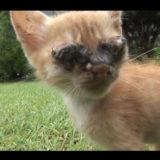 感染症で目が見えなくなった子猫がお母さんを見るまでの物語
