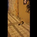 猫がネズミを発見!見つかったネズミvs猫の戦いがちょっと面白い!