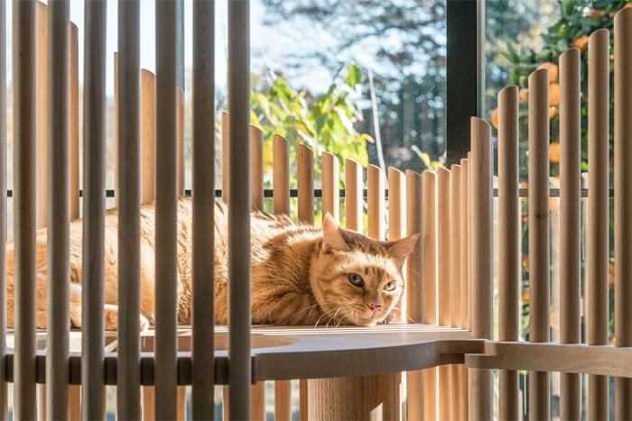 お値段100万!NEKO Modern Cat Tree