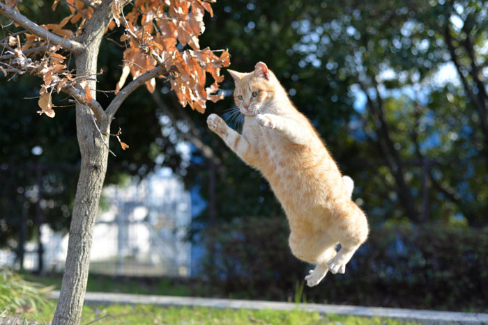 猫のジャンプが面白い動画!パニっくになる猫・自爆する猫ジャンプが笑える!