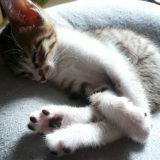 猫の名前が決まらない時に「これだ」という名前の決め方を紹介します!