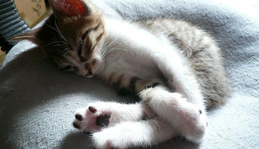 猫の名前が決まらない時に「これだ」という決め方を紹介します!