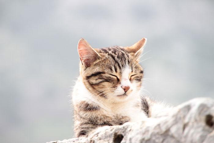 猫の名前が決まらないときはこうやって決めればいい!