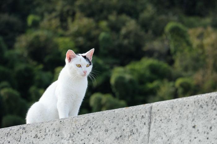 猫の名前を付ける時のポイント