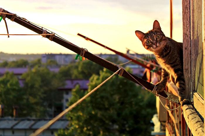 海外で人気の『猫の名前』ランキング!世界ではこんな名前が流行ってる!