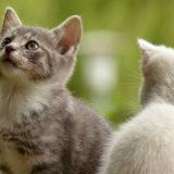猫に名前を覚えさるにはどうすれば?ニャ~と返事をさせる方法について
