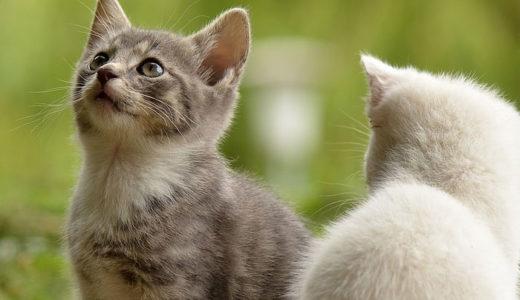 猫に名前を覚えさせるにはどうすれば?ニャ~と返事をさせる方法について