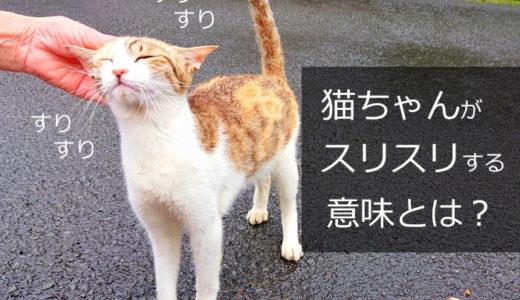 猫が「スリスリ」する意味とは?実はこんな気持ちでスリってたのです!