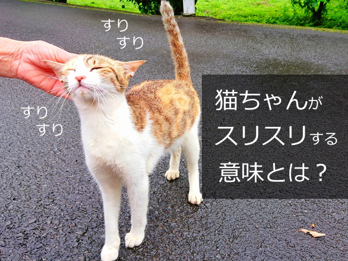 猫が「スリスリ」する意味