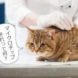 猫に装着するマイクロチップとは?安全性や費用・GPS機能などについて