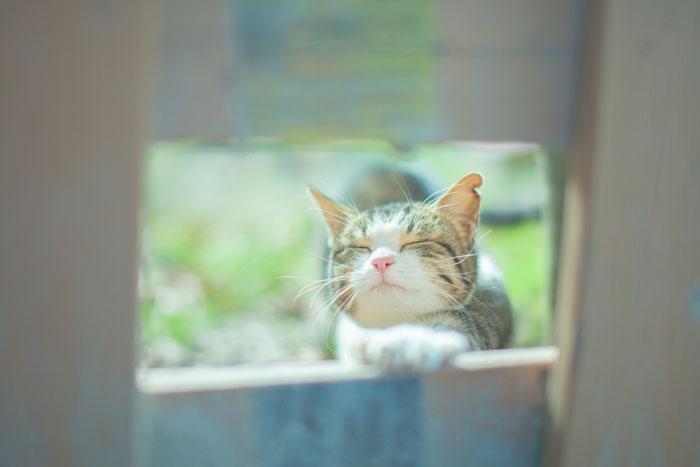 猫 マイクロチップのメリット