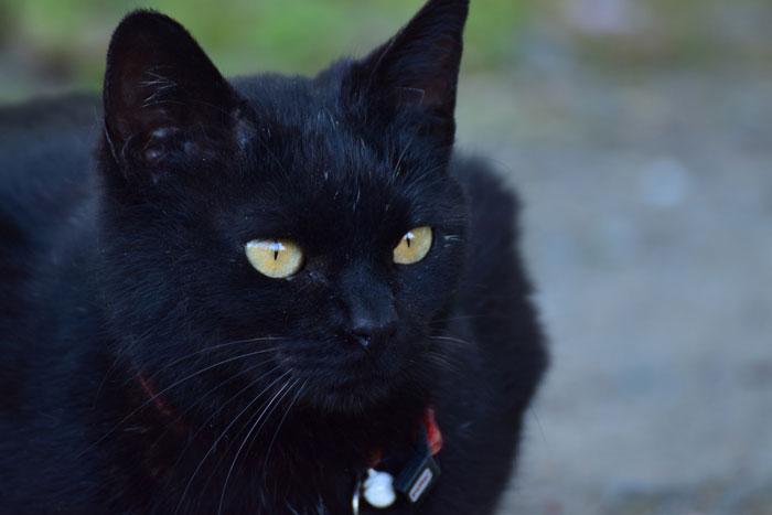 猫の位置が特定できる首輪を選ぶポイント