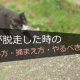 【経験談】猫が脱走した時の「やるべき事・探し方・捕まえ方」