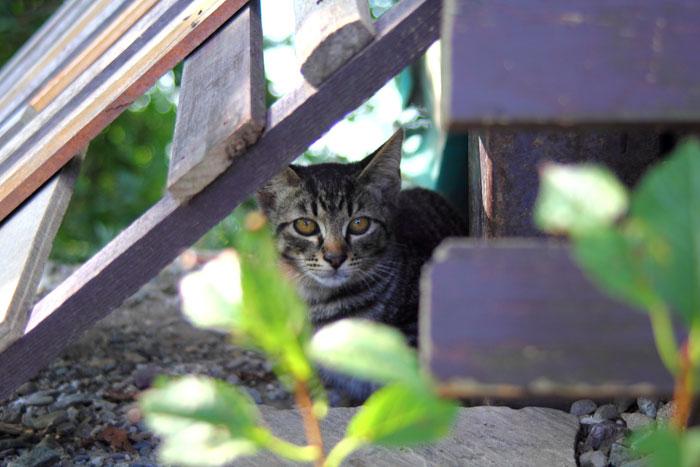 【探し方】:もし猫が脱走したら