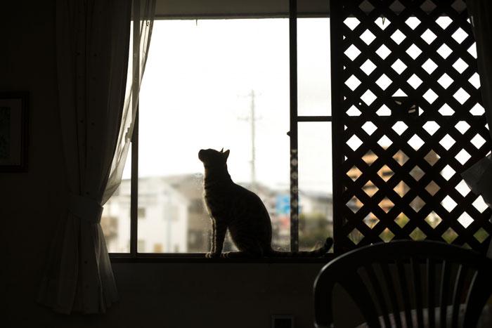 猫がマンションから脱走したらどこを探せばいい?