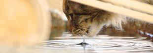 猫 首輪 水に強い素材なのか?