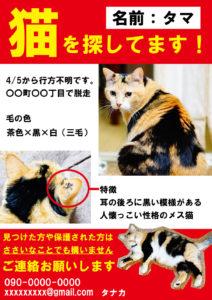 猫 迷子ポスター デザイン サンプル