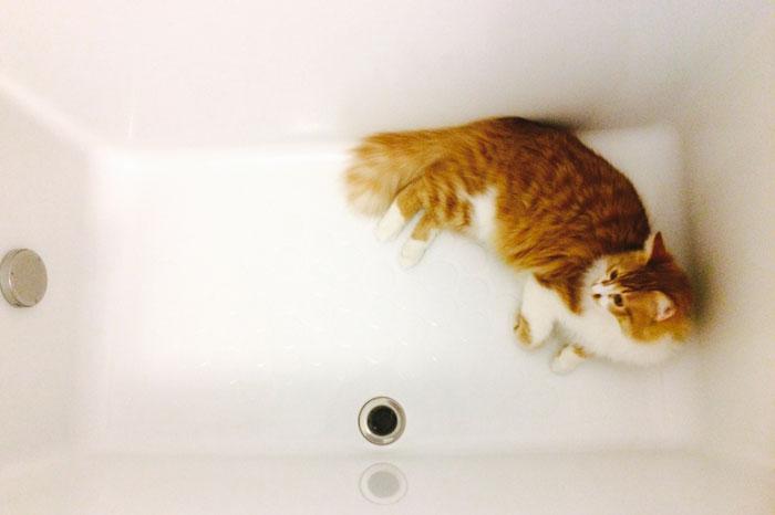 猫をシャンプーする場合のやり方