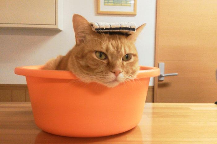 猫を洗う頻度について