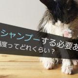 猫を洗う頻度ってどれくらい?シャンプーする必要はある?ない?