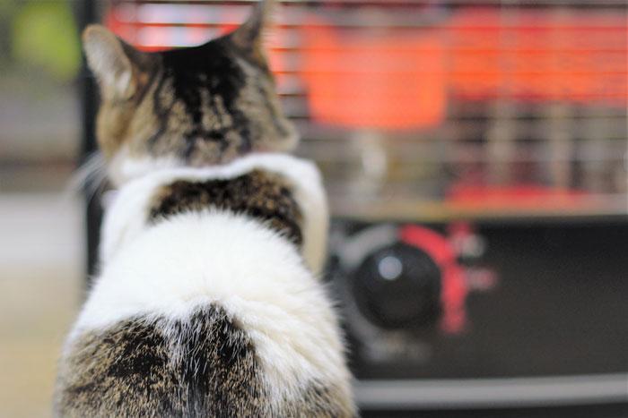 猫ちゃんに使う安全なヒーターの選び方