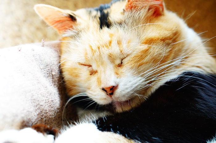 これで猫も快適!おすすめヒーターを紹介!