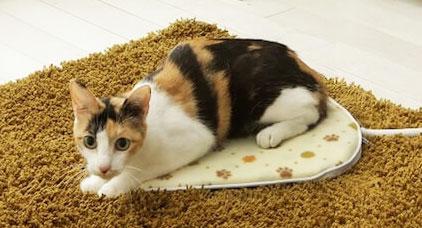 猫用暖房器具『ホットカーペット