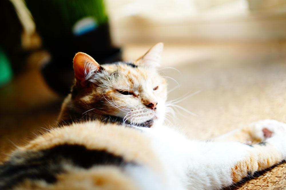 猫の寒さ対策のために知っておくべきこと