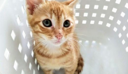 猫アレルギーを克服したい!そんな人にすぐできる対策と最新情報を紹介!