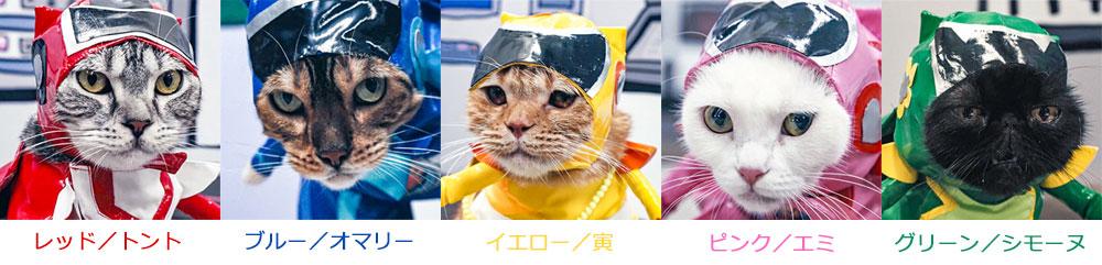 『ネコ戦隊 びたたま』に出演してる猫について