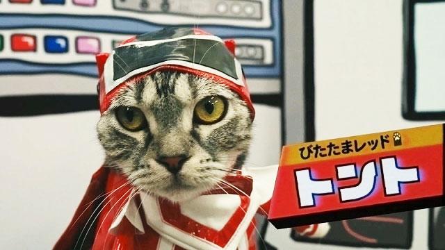 『ネコ戦隊 びたたま』とは