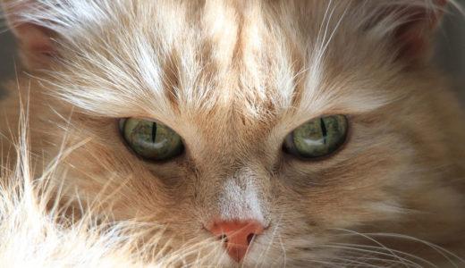 「この品種の猫ならアレルギーが少ないので飼えます」はガセネタ?