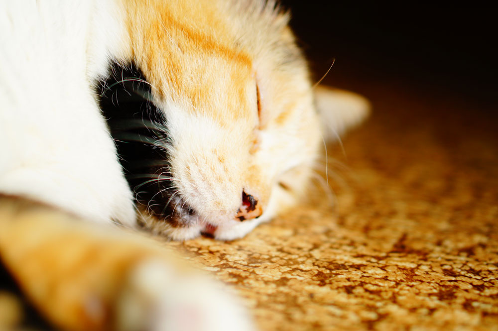 簡単にできる猫ニキビの治し方