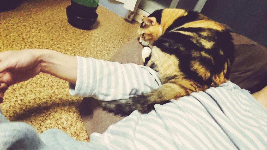 人をダメにするクッション 猫