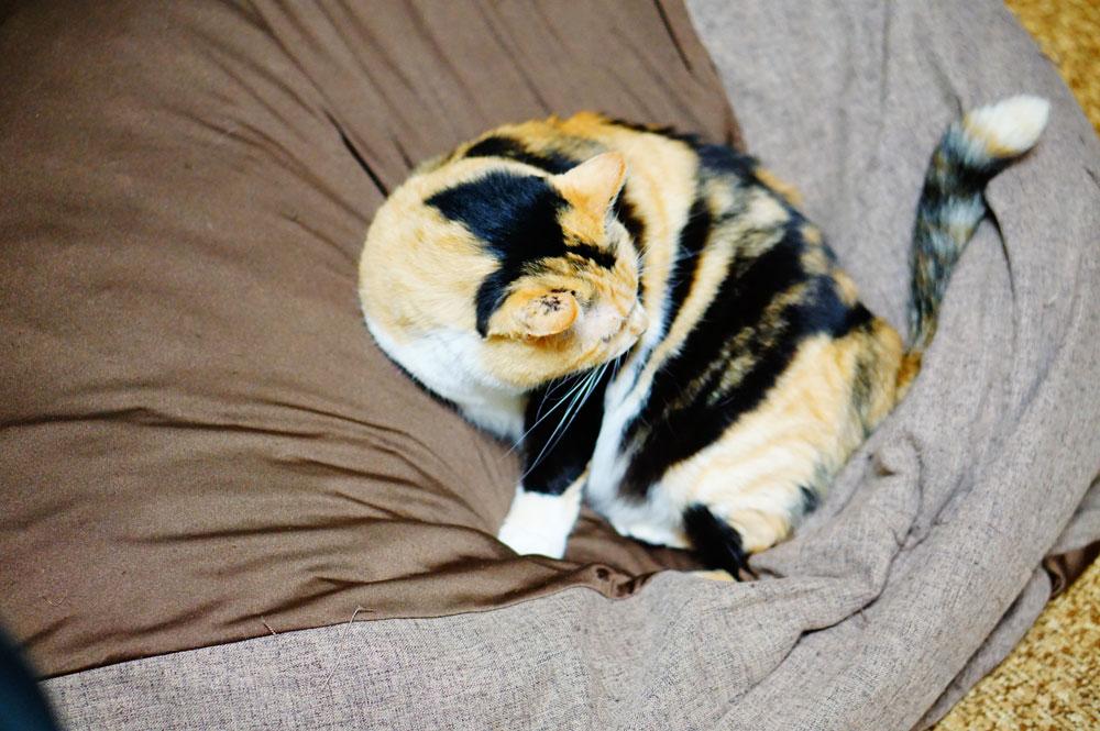 クッションを猫に汚されたら洗うことはできる?