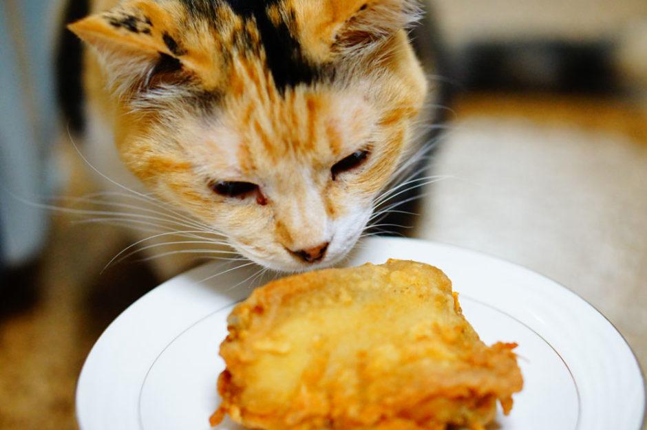 猫がケンタッキーのチキンを食べるのは危険?食べた場合どうすればいい?
