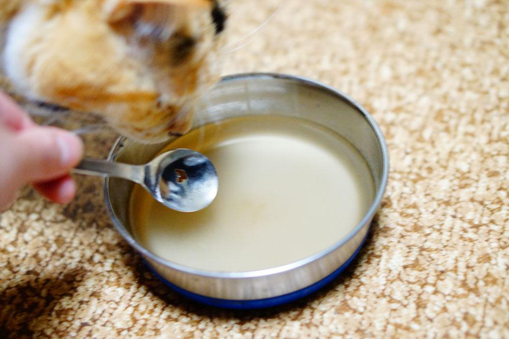 猫にマタタビ水を与える際の注意