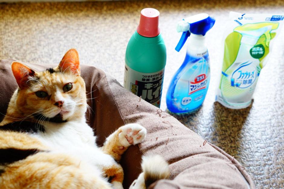 【経験談】猫が洗剤を舐めてしまい、私の取った行動が間違いだった。