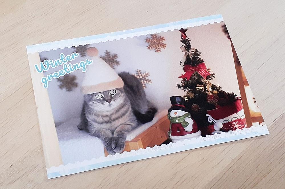 ねこ休み展 入場特典のポストカード