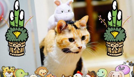 なんで猫だけ干支に入ってないの?猫年がないのはこんな理由だった!