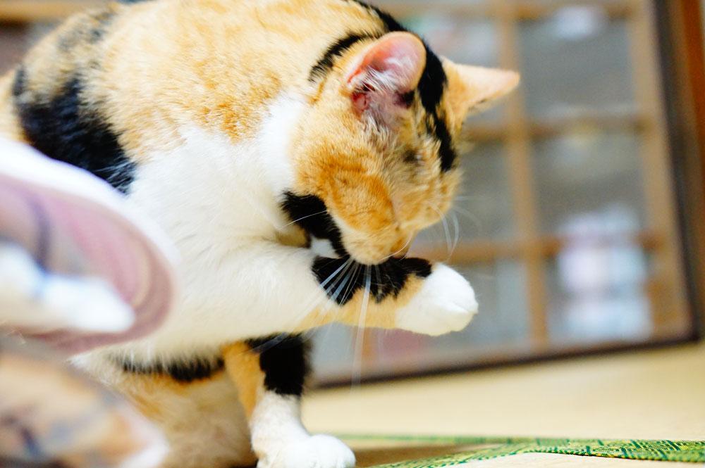 猫が舐めても大丈夫!おすすめのハンドクリームについて