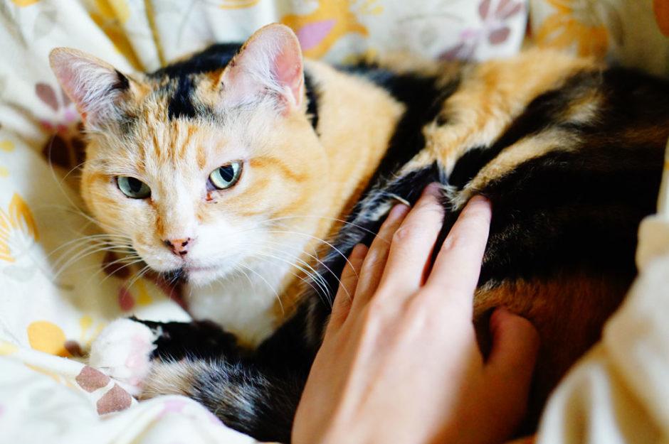 猫エイズってどんな病気?飼ってるネコの症状や暮らしぶりを書いてみた!