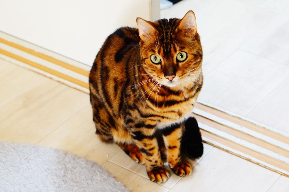 腎不全 生肉 猫