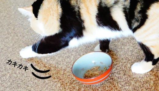「後で食べるにゃ」はちょっと違う!猫がご飯に砂をかけ隠す意味とは?