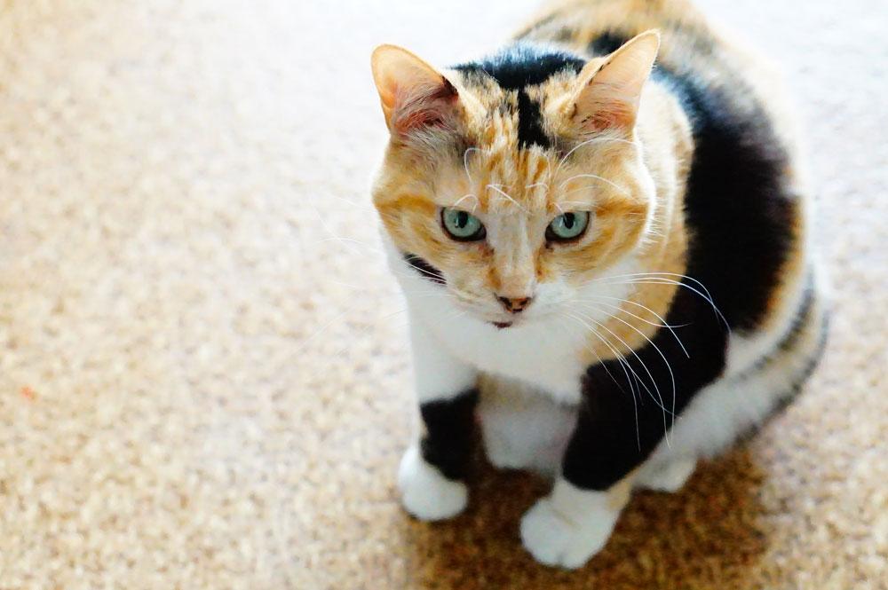 猫がご飯を隠そうとするのは敵にバレないための本能!