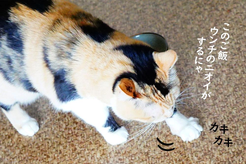 猫 ウンチと間違えて床をカキカキしてる説