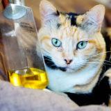 猫はホホバオイルを舐めても平気なの?危険性や体への害について